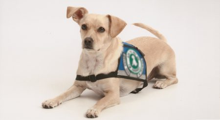 Fakes pose risk to assistance dogs